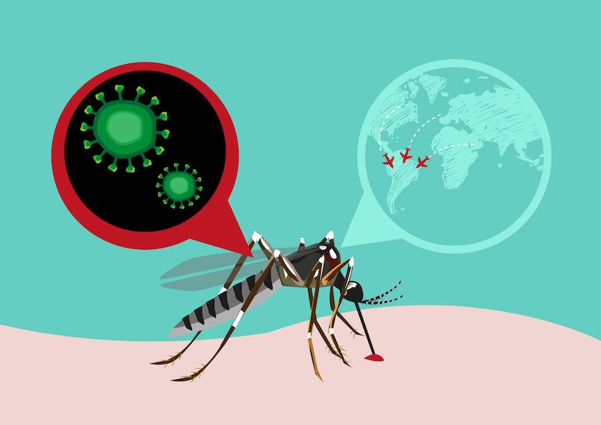 Pesquisa da UFRJ mostra que vacina contra Febre Amarela pode ser efetiva contra Zika