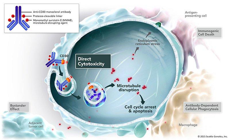 Pesquisas com anticorpo que atua como Cavalo de Troia mostram novos resultados positivos