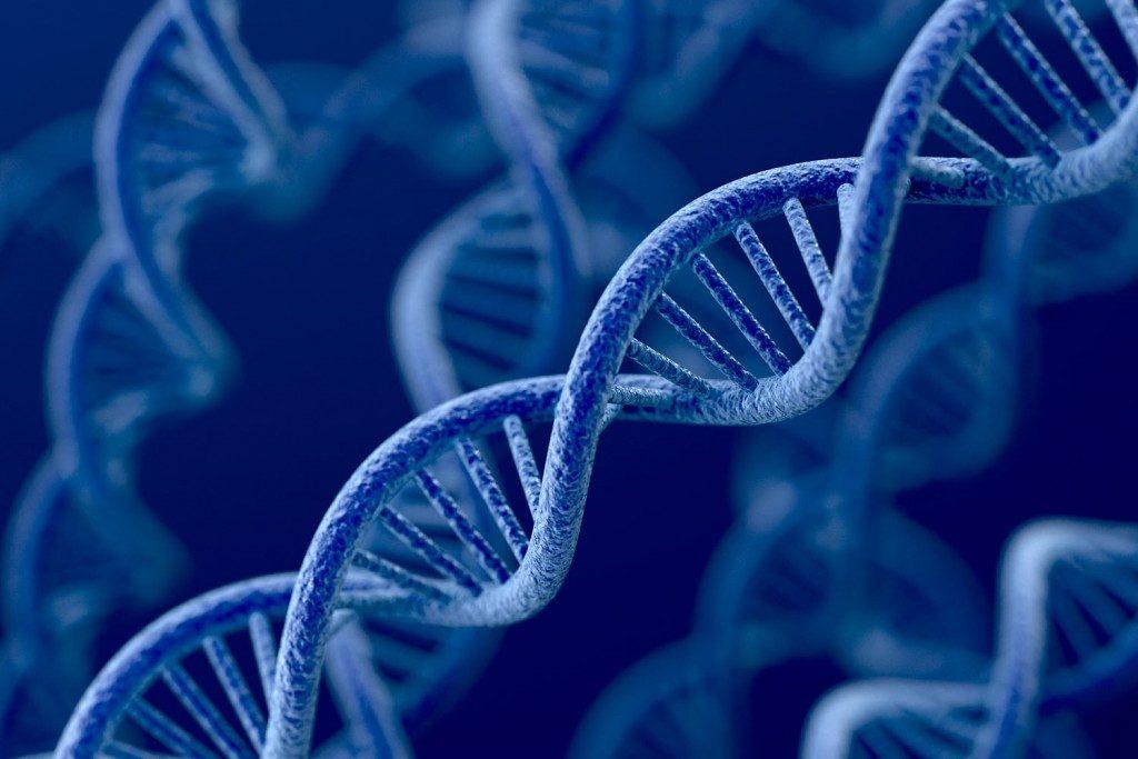 Qual é o impacto dos genes no índice de massa corporal?